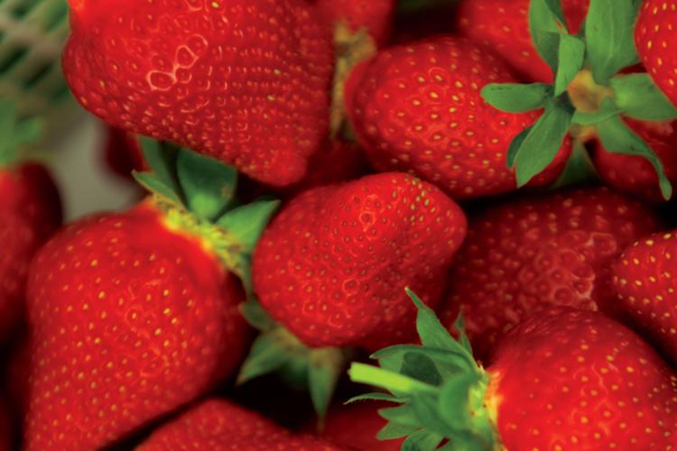N.C. Strawberries