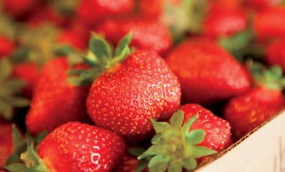 Ingram Berry Farm