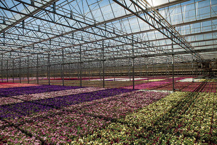 North Carolina nurseries