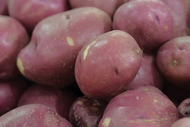 Pamlico Shores potatoes