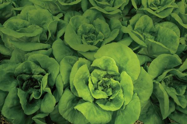 hydroponic farms