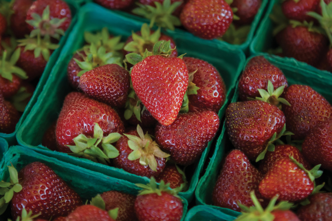 Farm Facts About Strawberries