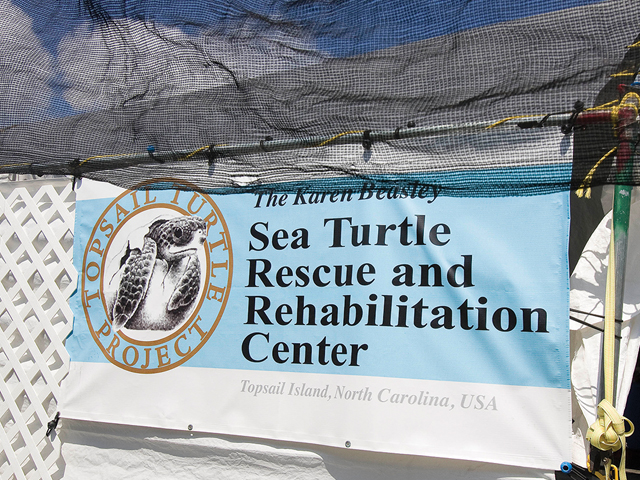 North Carolina Volunteers Show Passion for Sea Turtles ...