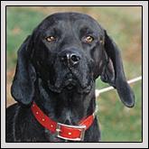 What Is The Plott Hound?: NORTH CAROLINA'S STATE DOG