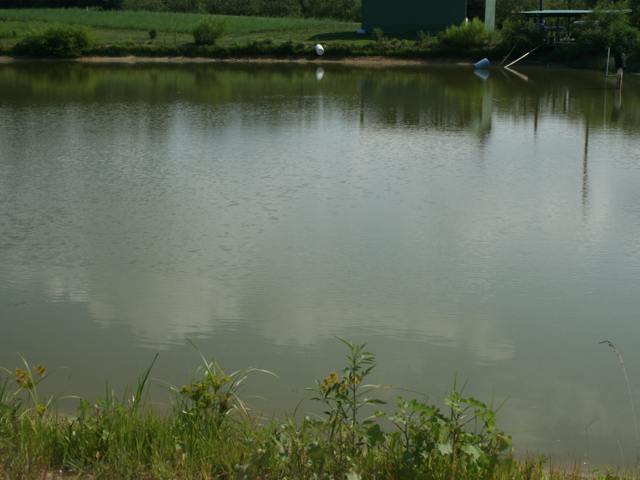 Farm Ponds Are More Than Just Water North Carolina Field