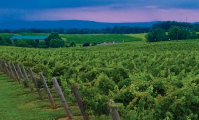 Shelton Vineyards in NC