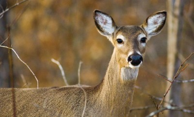 Farmers Manage Deer Program