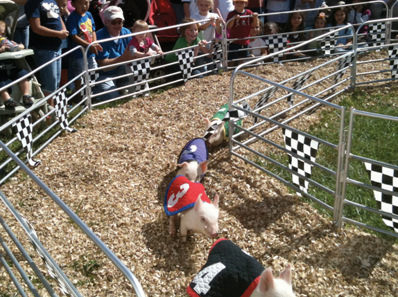 Dixie Classic Fair North Carolina Pig Racing