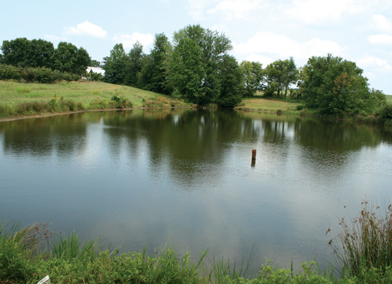 Farm Ponds Are More Than Just Water North Carolina Field And Family