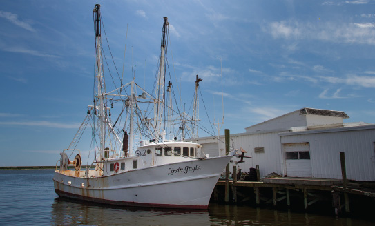 North carolina 39 s fishing industry catches up to a changing for Commercial fishing jobs