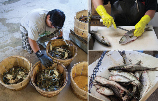 North Carolina's fishing industry