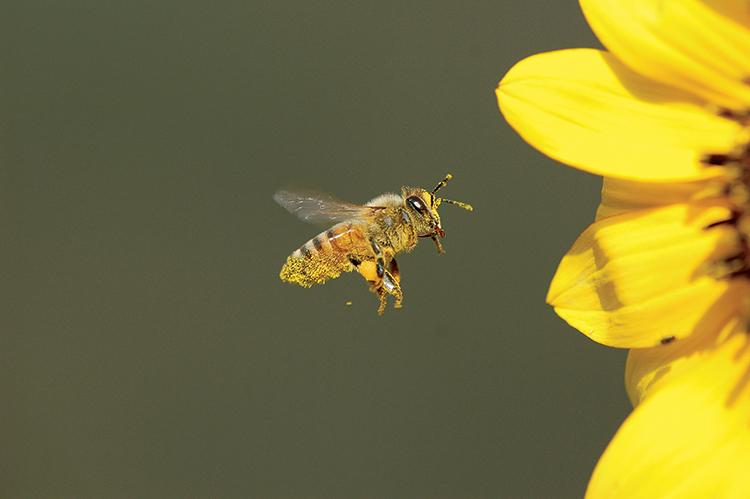 National Honeybee Event