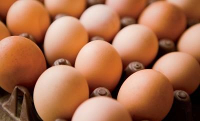 N.C. Egg Study