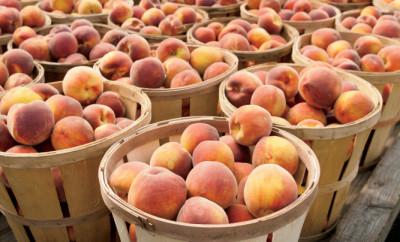 peach facts