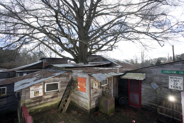 You Can Visit An Adult Sized Treehouse In Roseboro