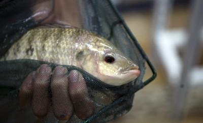 NC Aquaculture