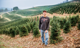 NC Christmas trees