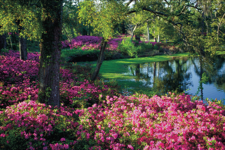 North Carolina Azalea Festival