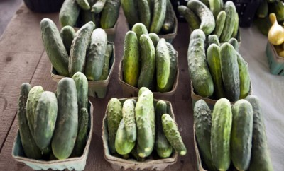 farm facts cucumbers