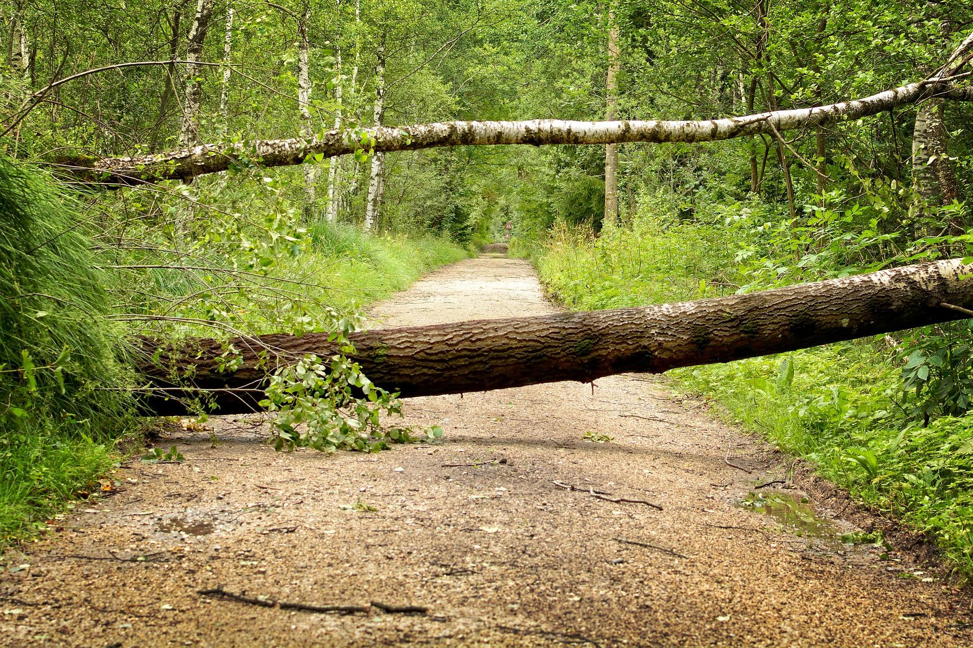 spring storm insurance